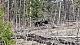 Senaste nytt från Björnjakten i British Columbia