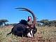 En fantastisk Sabel antilop