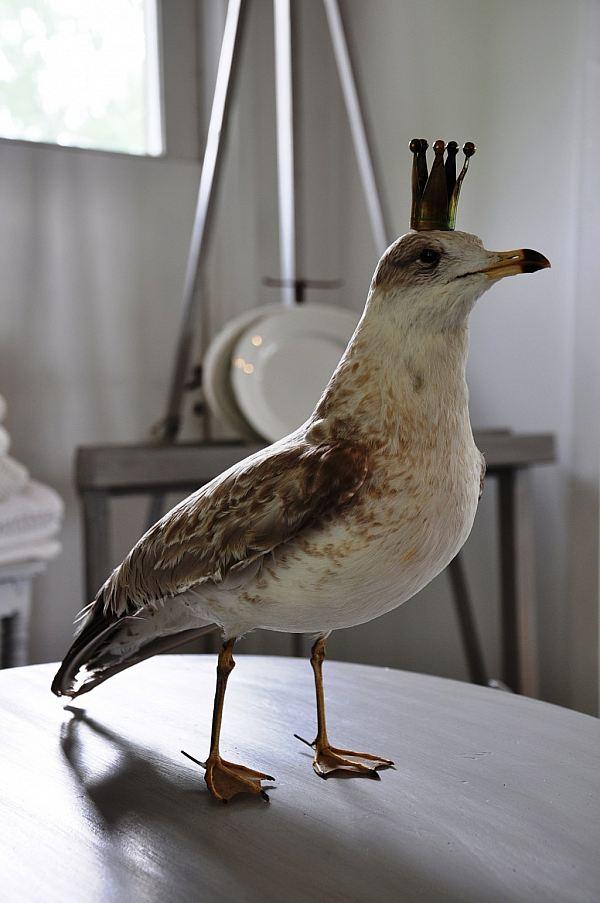 1516 Fågel