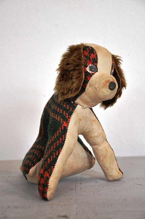 1537 Hund