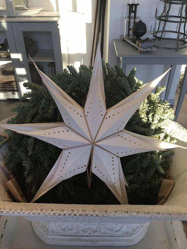 1750 Julstjärna