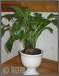 grön växt i mitt köksfönster