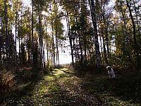 höstväg på landet