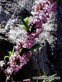 blommar  på bar kvist