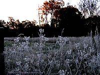 frost  i  skåne