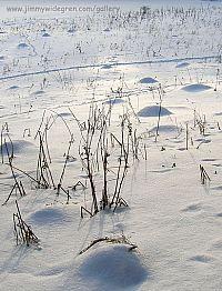 myrstackar under snön