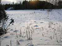 ant hills under snow