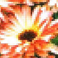 mönster - Ringblomma redbuff