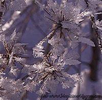 vinterglädje