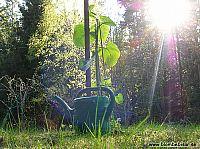 En nyplanterad och nyvattnatd planta