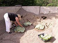 gjuta betong rabarber