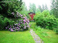 rododendron buske